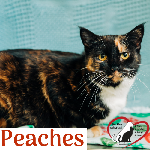 peaches dark 4567-1 main image