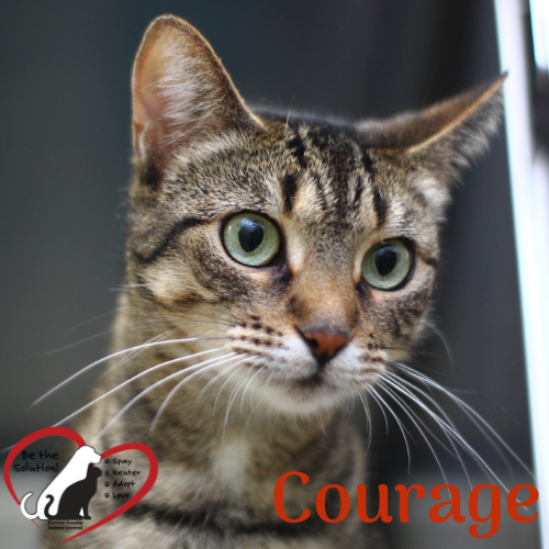 courage 4199 main image.jpg